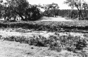 3rd Hole From Tee (2)